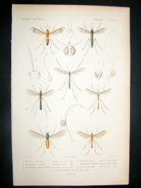 Cuvier C1840 Antique Hand Col Print. Insects 164